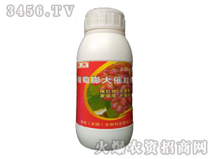 葡萄膨大催红素调节剂-漯丰王