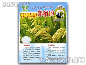 原稻一号-水稻种子-华信种业