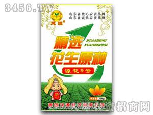 源花9号-花生种子-茂
