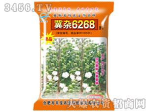 冀杂6268-棉花种子-丰宝