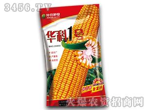 华科1号-玉米种子-仲衍种业