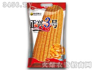 正兴3号-玉米种子-仲衍种业