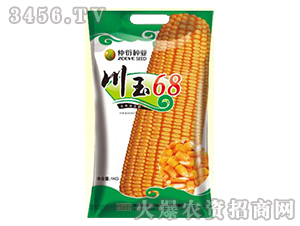 川玉68-玉米种子-仲衍种业