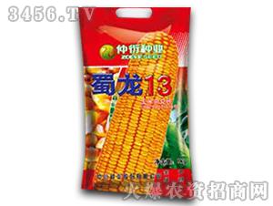 蜀龙13-玉米种子-仲衍种业