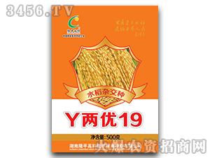 Y两优19-水稻杂交种-隆平高科