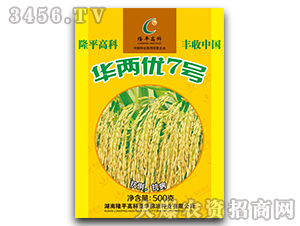 华两优7号-水稻种子-隆平高科