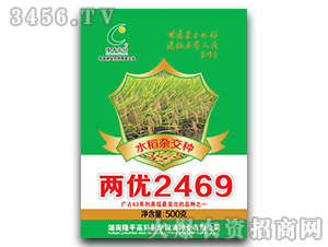 两优2469-水稻杂交种-隆平高科