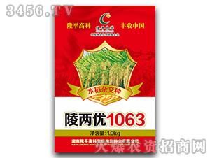 陵两优1063-水稻杂交种-隆平高科