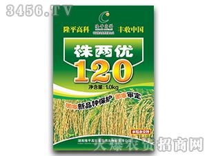 株两优120-水稻杂交种-隆平高科