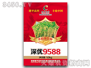深优9588-水稻杂交种-隆平高科