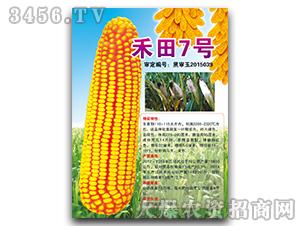 禾田7号(黑审)-玉米种子-宝诚种业