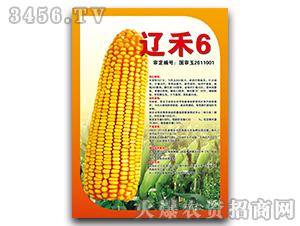 辽禾6(国审)-玉米种子-宝诚种业