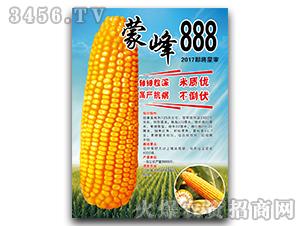 蒙峰888(2017即将蒙审)-玉米种子-宝诚种业
