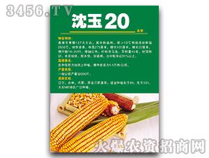 沈玉20(吉审)-玉米种子-宝诚种业