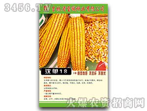 沈单18(辽审)-玉米种子-宝诚种业