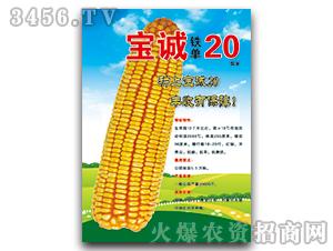 宝诚20(国审)-玉米种子-宝诚种业