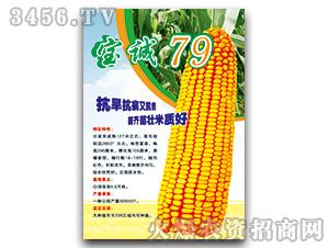 宝诚79-玉米种子-宝诚种业