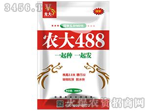 玉米种子-农大488-龙大种业
