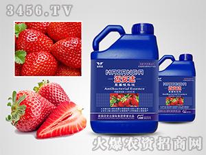 草莓专用根补液-迈安达