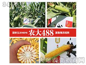 玉米种子-新国审农大488-龙大种业