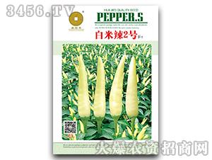 白米辣2号F1-辣椒种子-喜得丰-华为种业