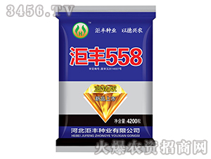 玉米种子蓝钻版-��丰558-��丰种业