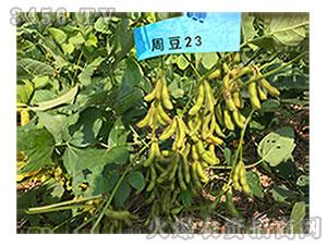 大豆种子-周豆23-地瑞种业