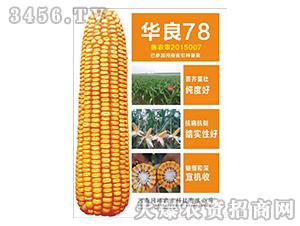 玉米种子-华良78-同路农业