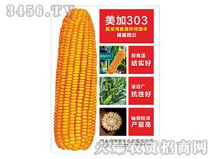 玉米种子-美加303-同路农业