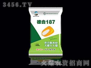 德合187-玉米种子-德合坤元