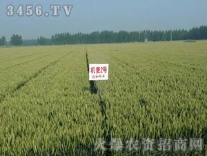 山农机麦2号-小麦-亿佳和