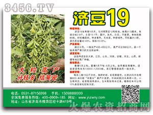 济豆19-大豆种子-种旺农业