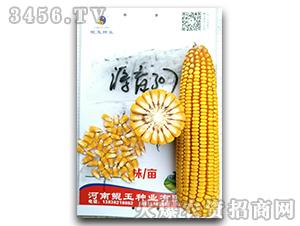 源玉307-玉米种子-鲲玉种业