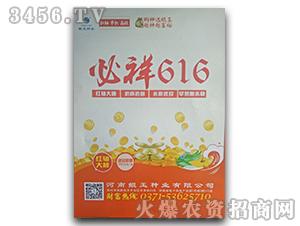 必祥616-玉米种子-鲲玉种业