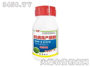 抗病高产原粉(孜然专用