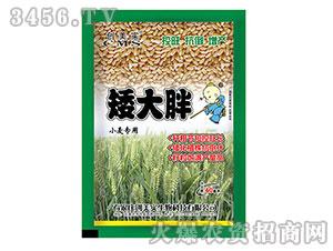 小麦专用调节剂-矮大胖