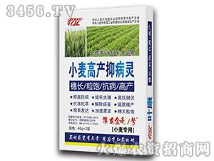 40g小麦高产抑病灵-豫东金亮1号-金亮化工