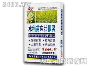 40g水稻苗床壮根灵-豫东金亮1号-金亮化工
