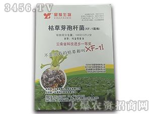 枯草芽孢杆菌-XF-1菌株-拓兴商贸