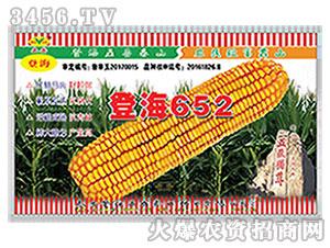 玉米种子-登海652-泰山种业