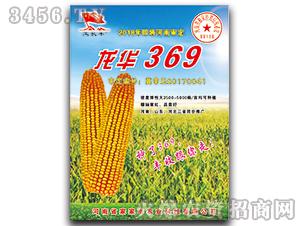 玉米种子-龙华369-家家丰