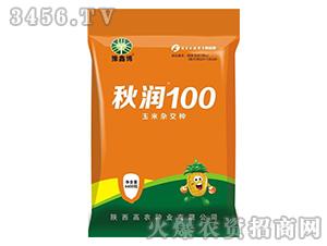 秋润100-玉米杂交种-豫鑫博