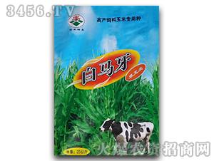 白马牙-高产饲料玉米专用种-田丰种业