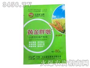 小麦控旺增产专用黄金胖