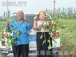 种旺农业棉花观摩会8