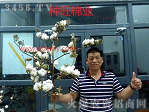 种旺农业棉花观摩会9
