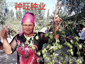 种旺农业棉花观摩会10
