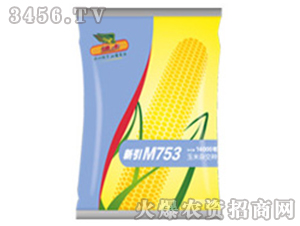 玉米杂交种子-M753(山西)-中种国际