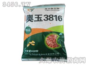 奥玉3816-玉米种子-良玉农业