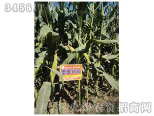 奥玉3816-良玉农业